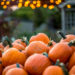 Enjoy A Good Autumn Chill With These Fun October Activities